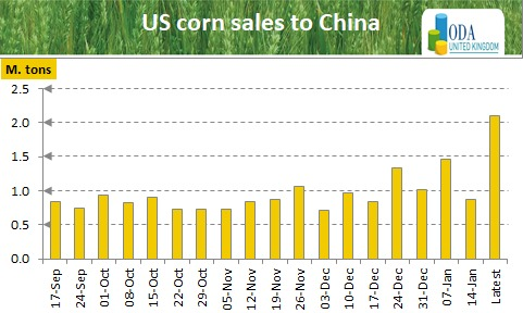 World prices rebound on tight old crop funadamentals as corn Chinese purchases surge again!